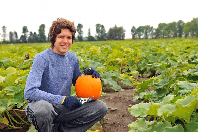 Manœuvres à la récolte