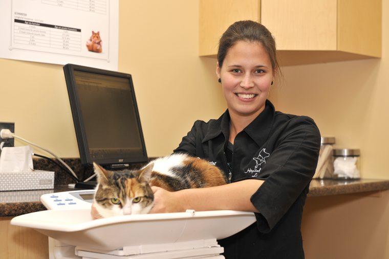 Technicienne en santé animale